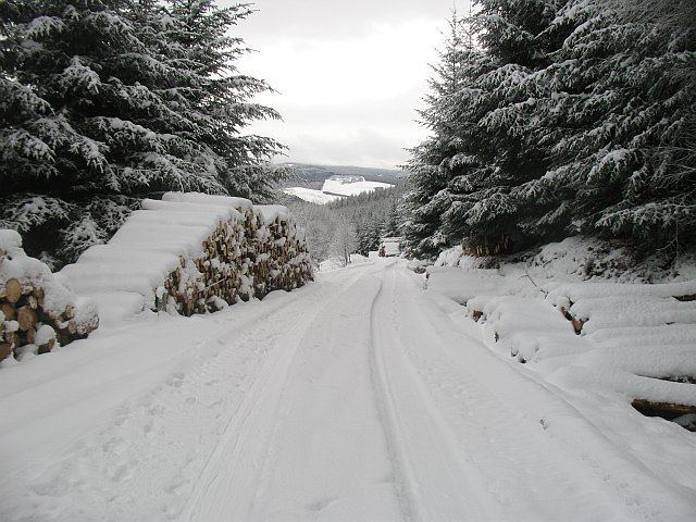 Cardrona Forest