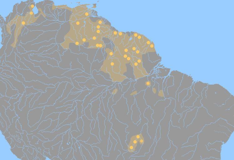 Cariban languages