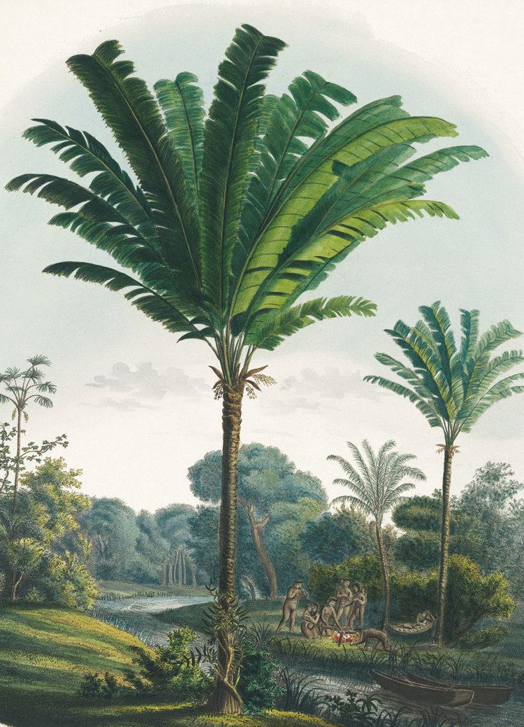 Carl Friedrich Philipp von Martius Book Review Martius Book of Palms The Gardening Register