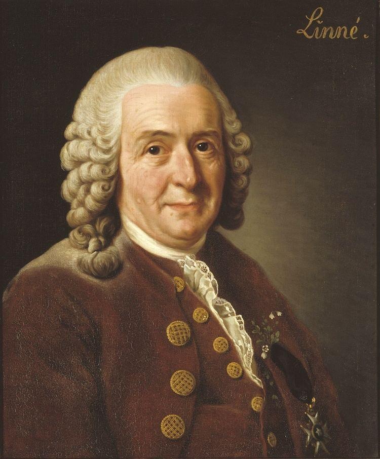 Carl Linnaeus httpsuploadwikimediaorgwikipediacommons66