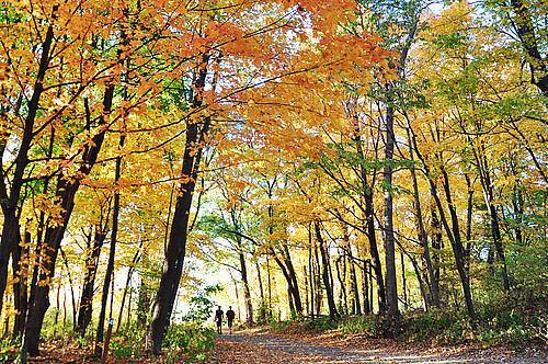Carleton College Cowling Arboretum Arboretum Tour Cowling Arboretum Carleton College