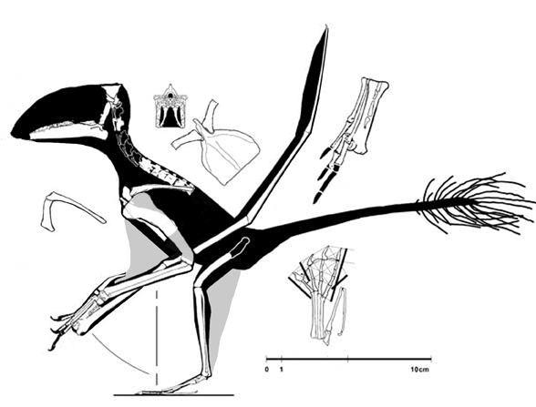Carniadactylus wwwreptileevolutioncomimageslepidosauromorpha