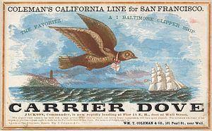 Carrier Dove (clipper) httpsuploadwikimediaorgwikipediacommonsthu