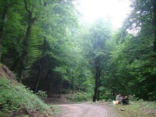 Caspian Hyrcanian mixed forests Hyrcanian forester Caspian Hyrcanian mixed forests