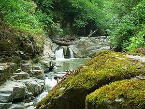 Caspian Hyrcanian mixed forests httpsuploadwikimediaorgwikipediacommonsthu