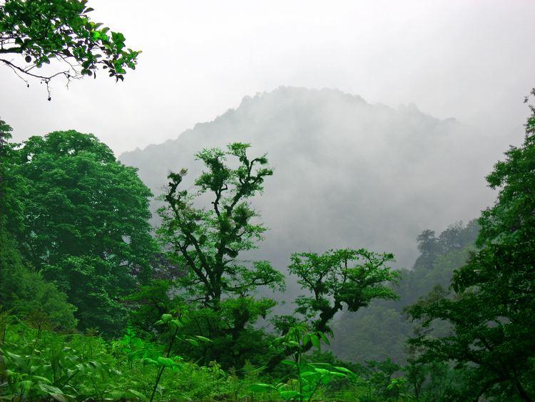 Caspian Hyrcanian mixed forests Caspian Hyrcanian mixed forests Wikipedia