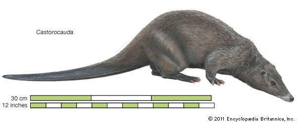 Castorocauda Castorocauda extinct mammal genus Britannicacom
