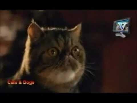 Cats %26 Dogs movie scenes Cats Dogs Calico funny scenes
