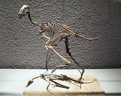 Caudipteryx Caudipteryx Wikipedia