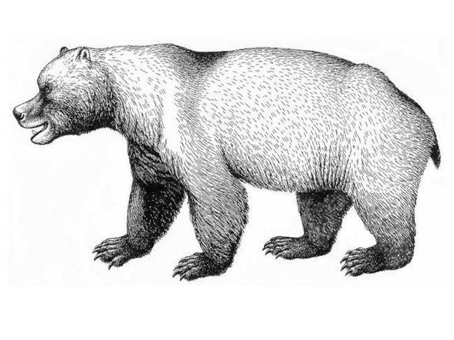 Cave bear Huge Cave Bears When and Why They Disappeared