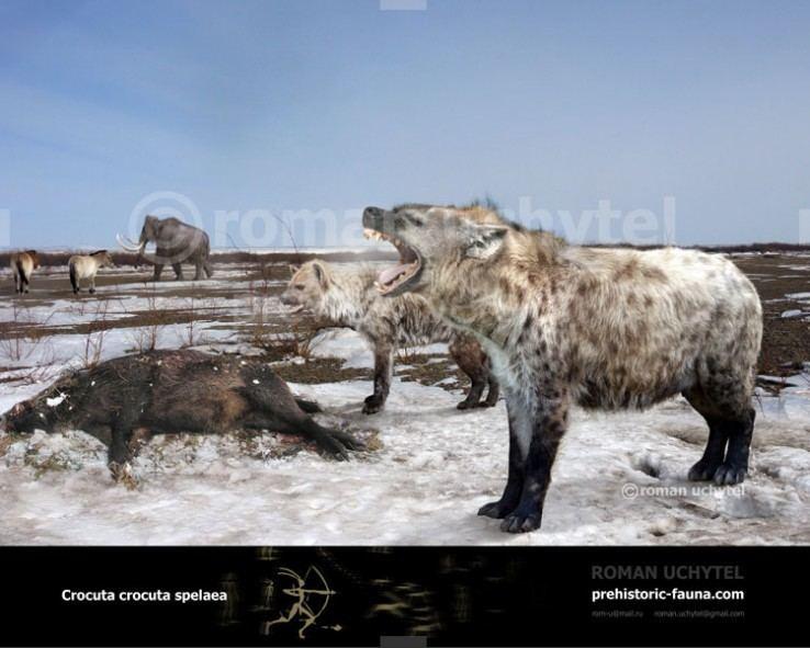 Cave hyena prehistoricfaunacomimagecachedataCrocutacro