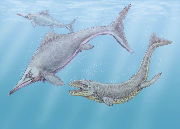Caypullisaurus httpsuploadwikimediaorgwikipediacommonsthu