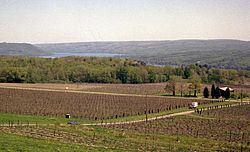 Cayuga Lake AVA httpsuploadwikimediaorgwikipediacommonsthu