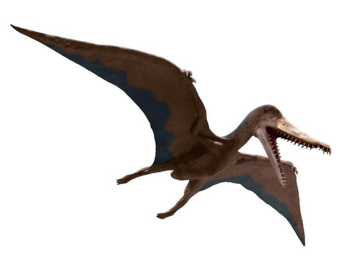 Cearadactylus Cearadactylus Pictures amp Facts The Dinosaur Database