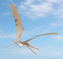 Cearadactylus httpsuploadwikimediaorgwikipediacommonsthu