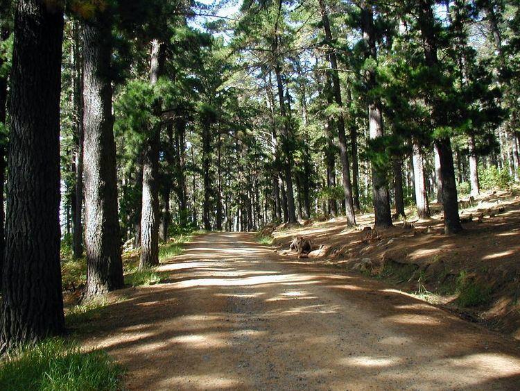 Cecilia Forest Cecilia Forest Broke Tourist