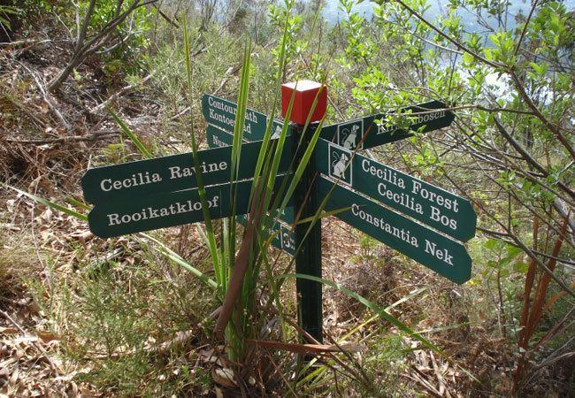 Cecilia Forest Cecilia Forest