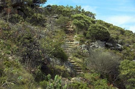 Cecilia Forest Cecilia Forest Cape Town