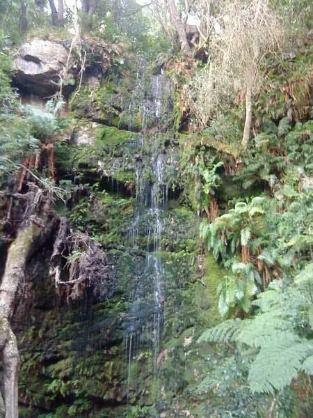 Cecilia Forest Cecilia Waterfall Cape Hike