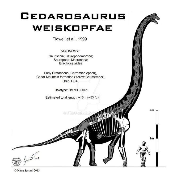 Cedarosaurus Cedarosaurus weiskopfae by PaleoKing on DeviantArt