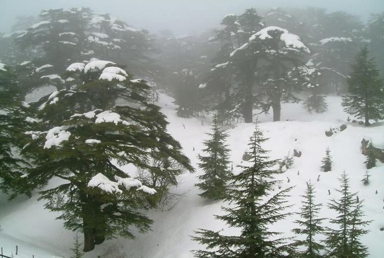 Cedars Ski Resort