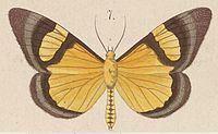 Celerena httpsuploadwikimediaorgwikipediacommonsthu
