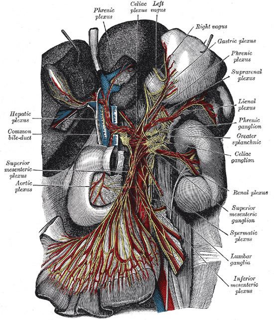 Celiac ganglia