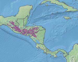 Central American pine-oak forests httpsuploadwikimediaorgwikipediacommonsthu