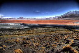 Central Andean dry puna httpsuploadwikimediaorgwikipediacommonsthu