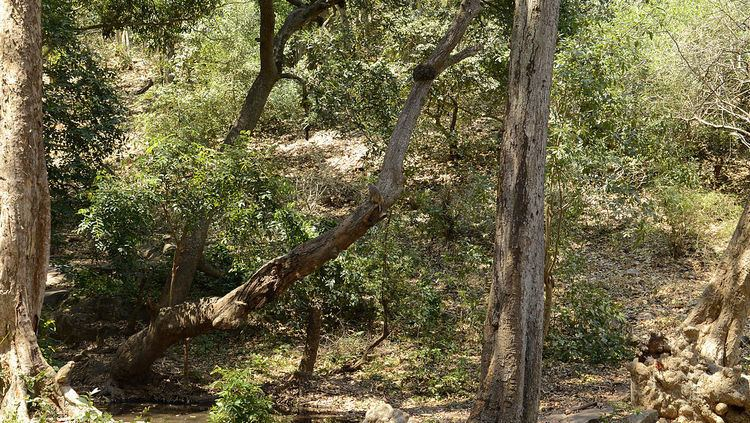 Central Deccan Plateau Dry Deciduous Forests