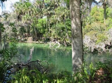 Central Florida wwwmiamibeach411comeeimagesuploadsbluespring