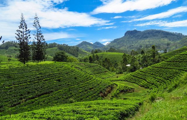 Central Highlands of Sri Lanka Holiday Packages in Sri Lanka Mini Central Highlands Tour