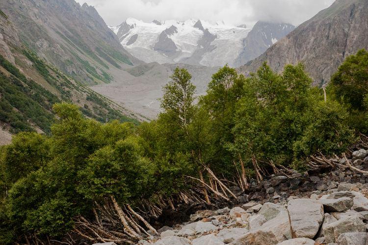 Central Karakoram National Park Flora