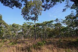 Central Zambezian miombo woodlands httpsuploadwikimediaorgwikipediacommonsthu