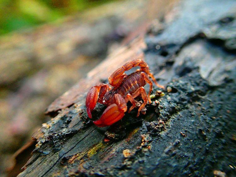 Chaerilus The World39s newest photos of chaerilus Flickr Hive Mind
