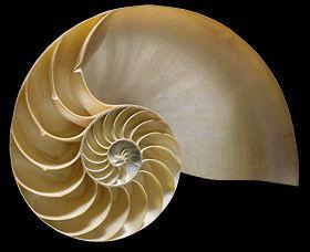 Chambered nautilus Chambered Nautilus Deep Sea Creatures on Sea and Sky