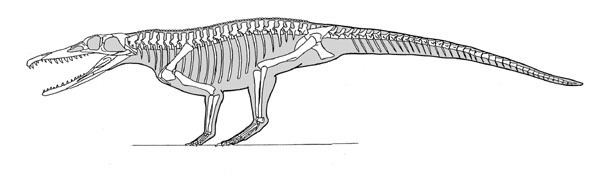 Chanaresuchus Untitled Document