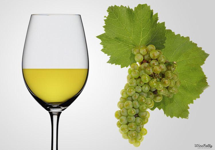 Chardonnay Chardonnay Wine Guide Wine Folly