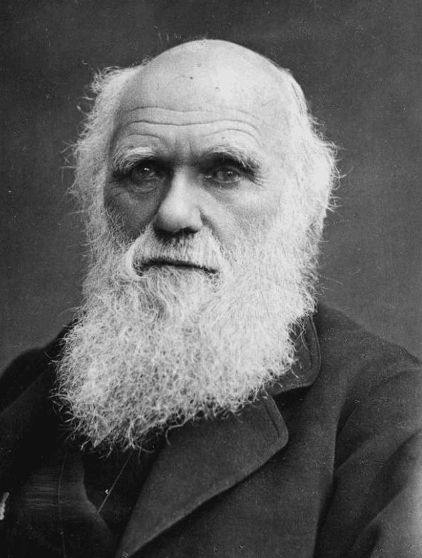 Charles Darwin Charles Darwin Nabilla Gunawan