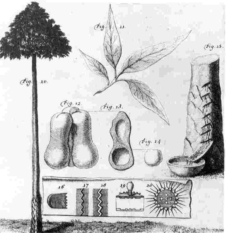 Charles Marie de La Condamine Untitled Document