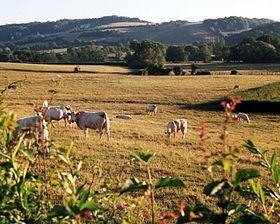 Charolais, France httpsuploadwikimediaorgwikipediacommonsthu