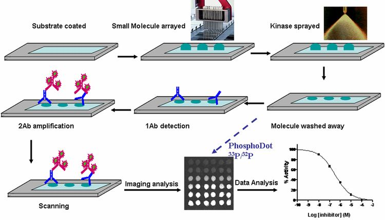 Chemical compound microarray