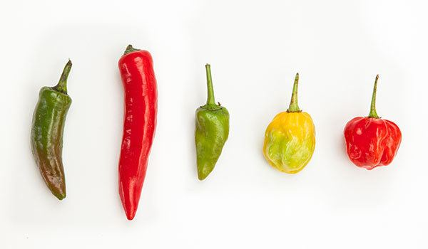 Chili pepper How Chili Peppers Work Stuff You Should Know