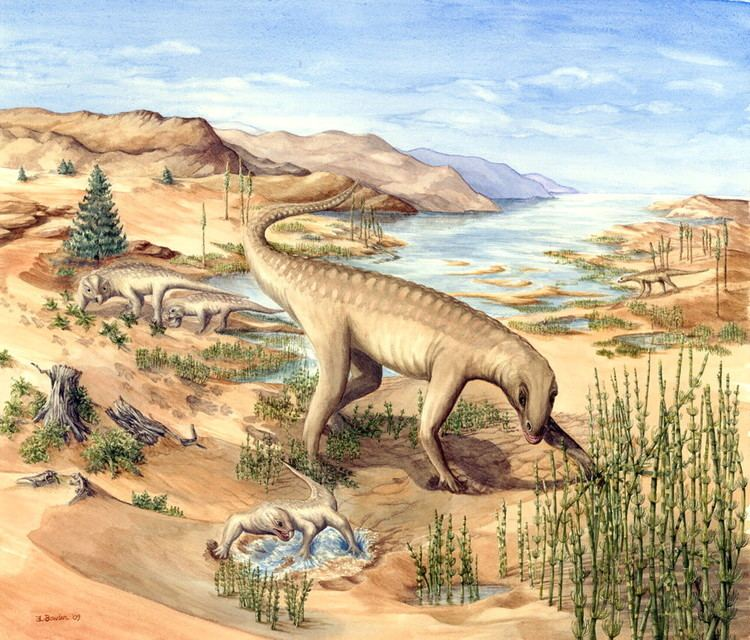 Chirotherium Chirotherium the Liverpool footprint hunters and their