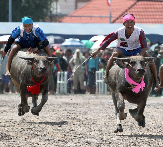 Chonburi Province Festival of Chonburi Province
