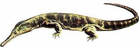 Choristodera Palaeos Vertebrates Choristodera