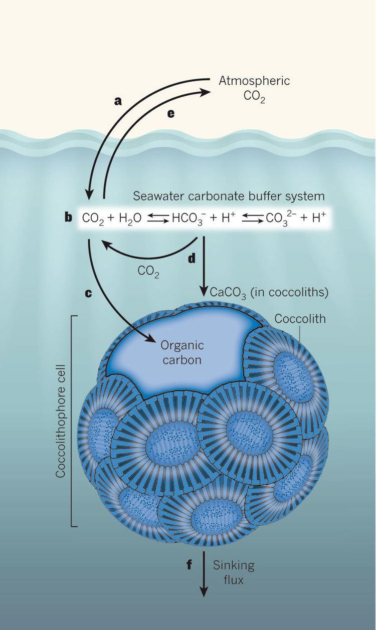 Coccolithophore Coccolithophore carbon chemistry Oceanography Forecasting the
