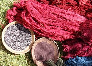 Cochineal Cochineal ThesisRed Dye Extract from Cochineal Insect