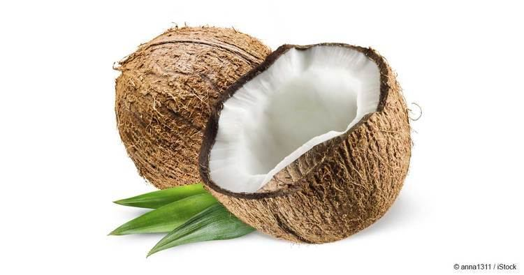 Coconut What are Coconuts Good For Mercolacom