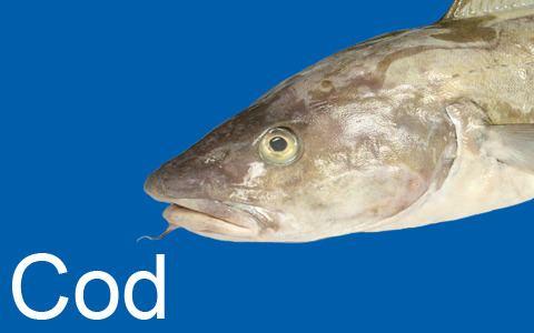 Cod Cod Fish and Kids